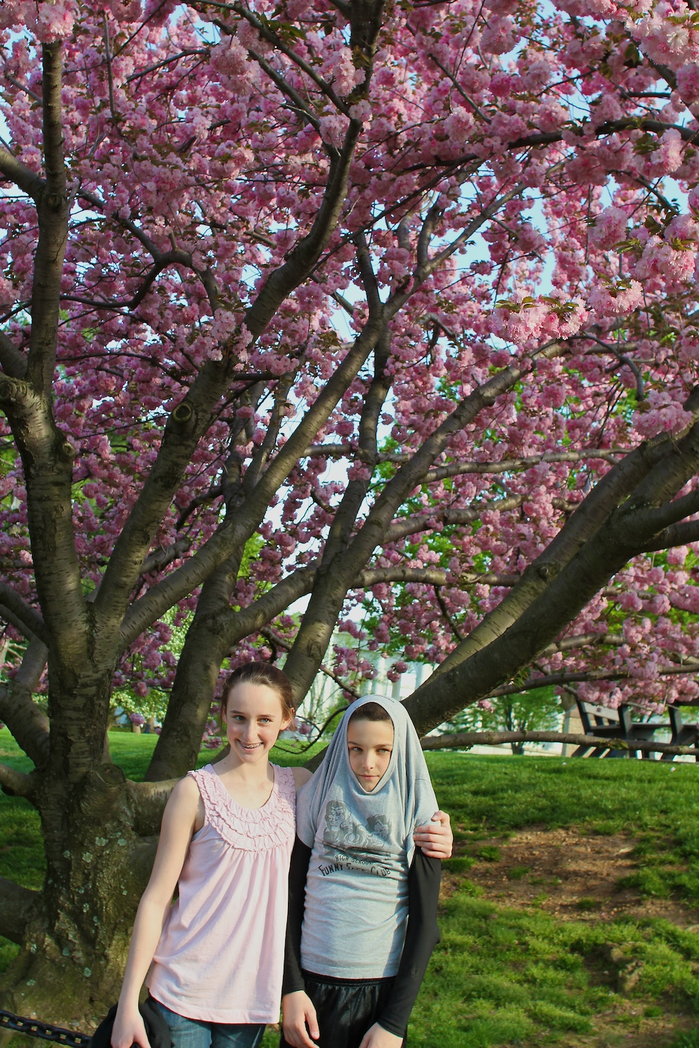 The cherry trees were still in bloom at Arlington National Cemetery